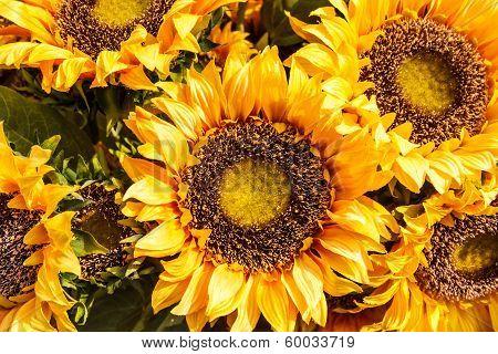 Yellow Sunflowers Wallpaper