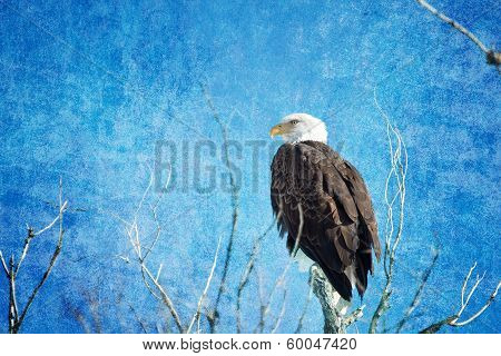 Bald Eagle Blues