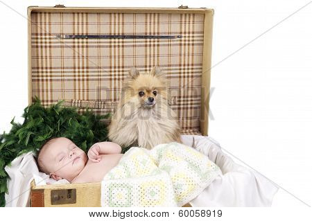 Baby Sleeping In A Suitcase With Dog