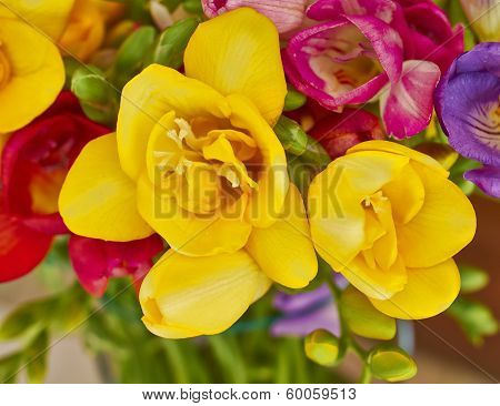 yellow freesia closeup floral background