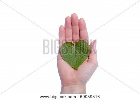 Heart Shaped Leaf In Girls Hand