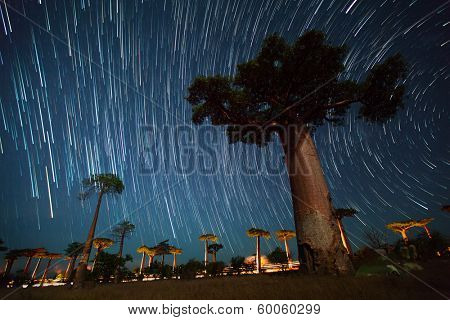 Baobab alley and starry sky. Madagascar
