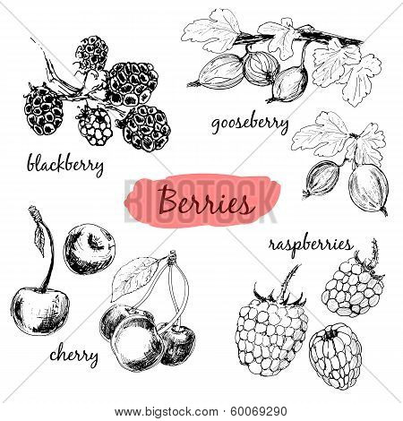 Berries. Set of illustrations