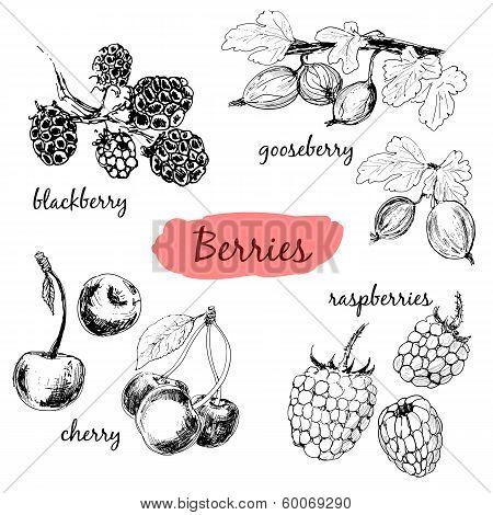 Berries. Set of illustrations