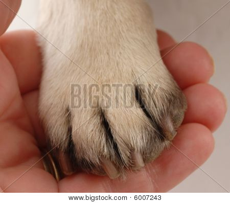 Person Holding Dog Paw