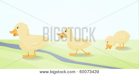 The illustration  three cute duckling.