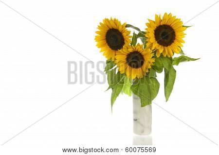Sunflowers In Marble Vase And Isolated In White