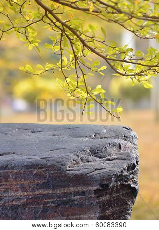 empty stone table with leaves in background