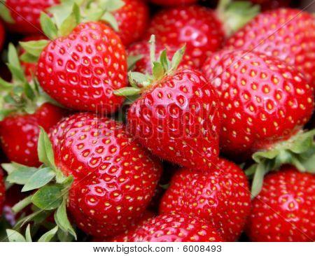 Fresh Starwberries