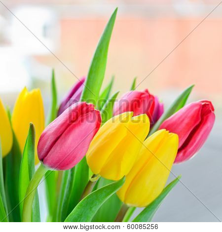 Multi Coloured Tulips