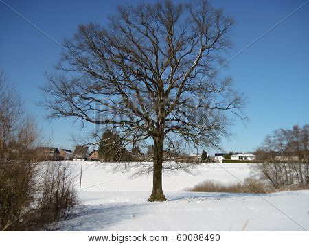 Kahler Baum in verschneiter Wintersonne