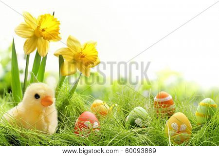 Yellow Easter chick and Easter eggs in a field