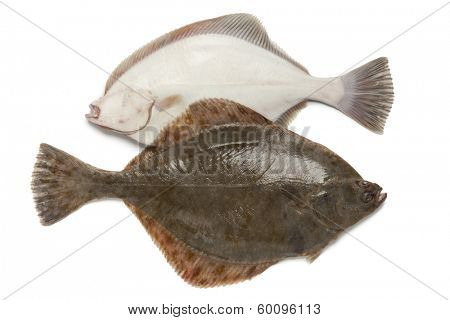 Front and back of fresh  European flounders on white background
