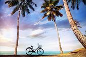 picture of siluet  - Bicycle with basket on the beach near palm trees and ocean in India - JPG