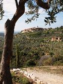 stock photo of hilltop  - Landscape in Tuscany with an olive tree a walking path and a typical hilltop town overlooking the Val d - JPG