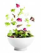 picture of escarole  - Falling salad with green leaves in a bowl on the white - JPG