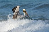 Fun with Pelicans - In Action
