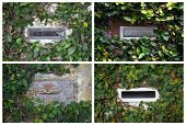 stock photo of postbox  - Collage with postboxes with ivy on stone wall in Brazil - JPG