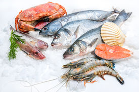 image of shell-fishes  - Seafood on ice at the fish market - JPG