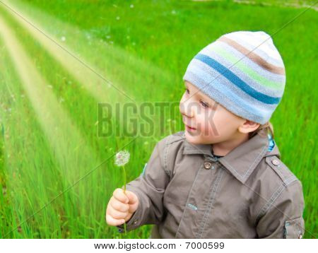 The Boy With A Dandelion On A Green Lawn
