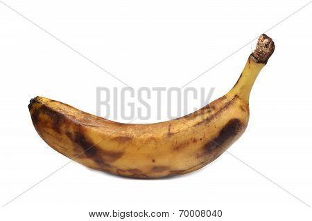 Old Rotten Banana