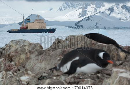 Icebreaker Sailing On The Scored Ice Antarctic Strait Near The Penguin Colony