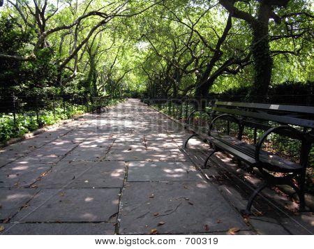 Shady Central Park