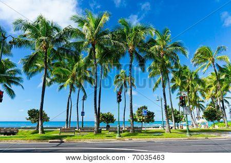 Palms In Honolulu, Hawaii, United States