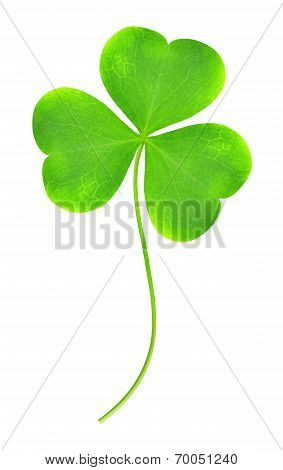 Green clover leaf