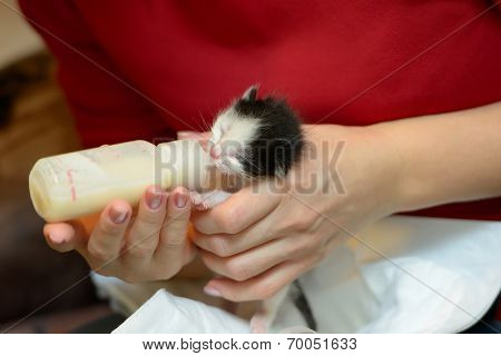 orphan kitten drinking milk from little bottle