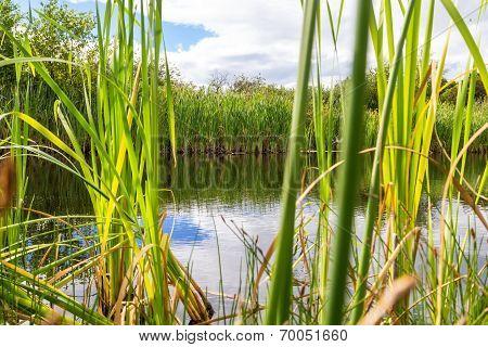beautiful summer lake