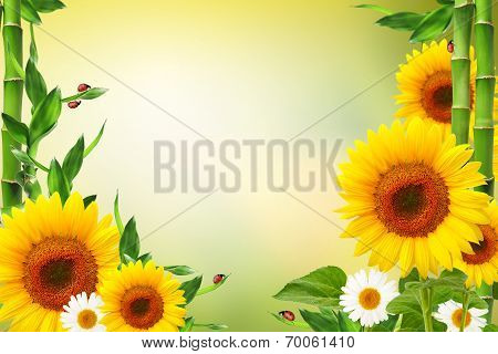 Spring Floral Background With Ladybugs