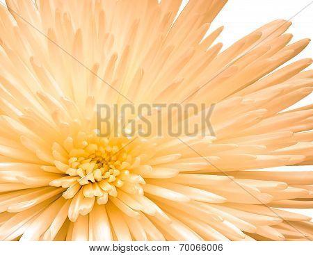 Close - Up Flower