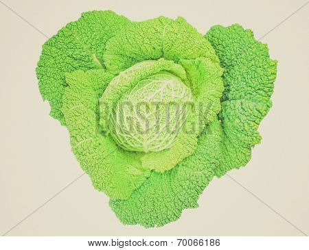 Retro Look Green Cabbage