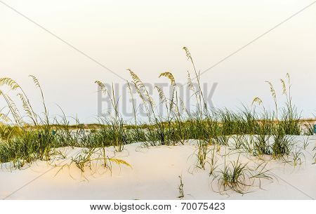 Beach With Dunes And Green Grass In Sunset