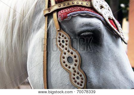 a horse with sad eyes