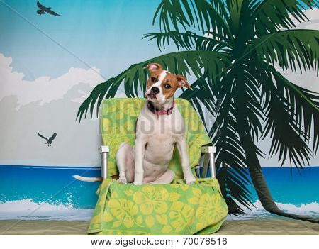 Puppy on a beach chair