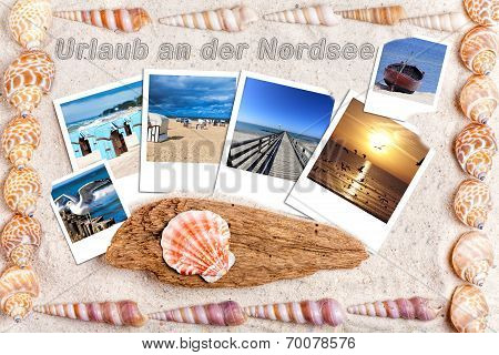 Sand Background With Instand Photos And Shells