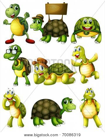 Ilustration of a set of turtle with actions