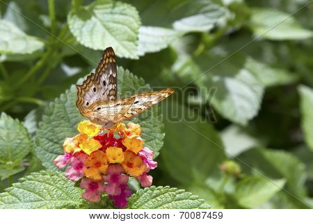 Butterfly Feeding On Bright Flower