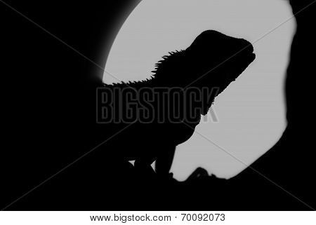 Silhouette Of A Water Dragon