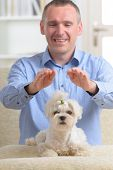 picture of qigong  - Man doing Reiki therapy for a dog - JPG