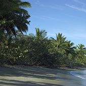 picture of deserted island  - Small deserted island with tall palm trees - JPG