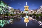 picture of night-blooming  - To - JPG