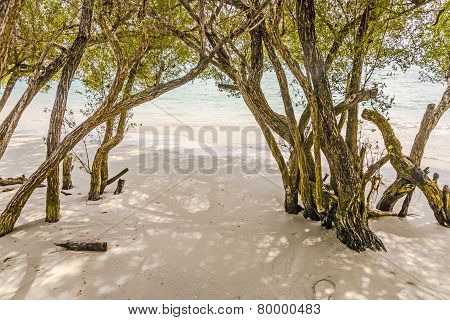Tropical Beach In  Thailand With Trees