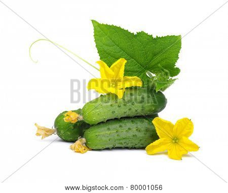 green cucumber with flower and leaves