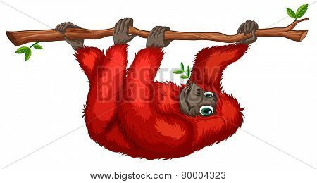 Illustration of an orangutan hanging on a branch