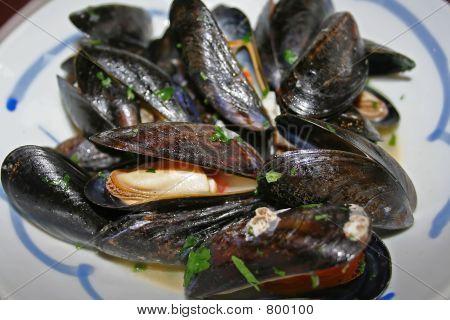netherlands mussels