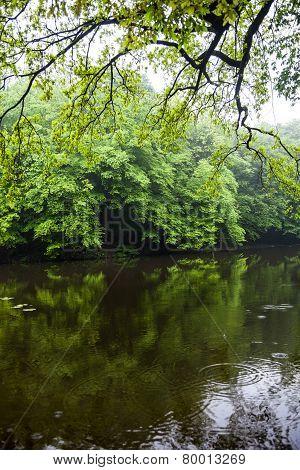 Water Landscape In Summer