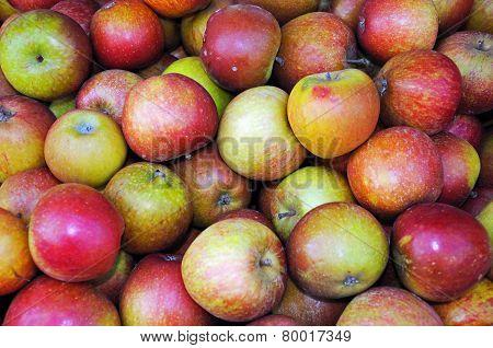 English Cox apples.